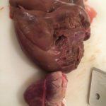 Pork Heart and Liver